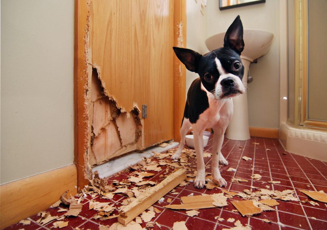Beschaeftigung-fuer-Deinen-Hund