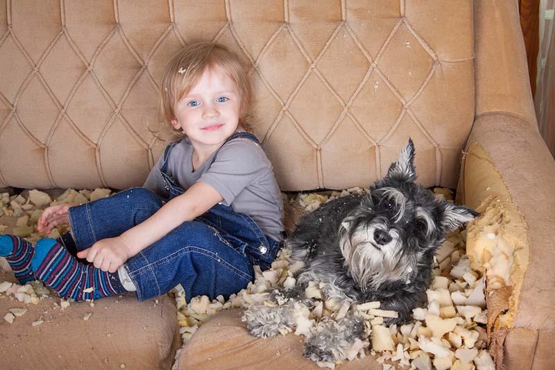 Brauchen Hunde Kauknochen, oder ist ein Sofa gut genug?